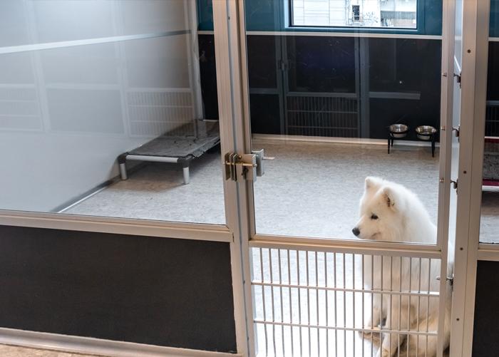 hotel pour chiens