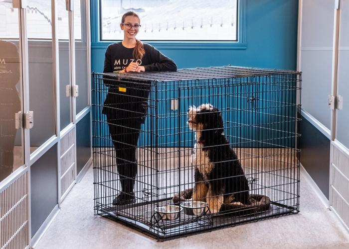 hotels pour chiens
